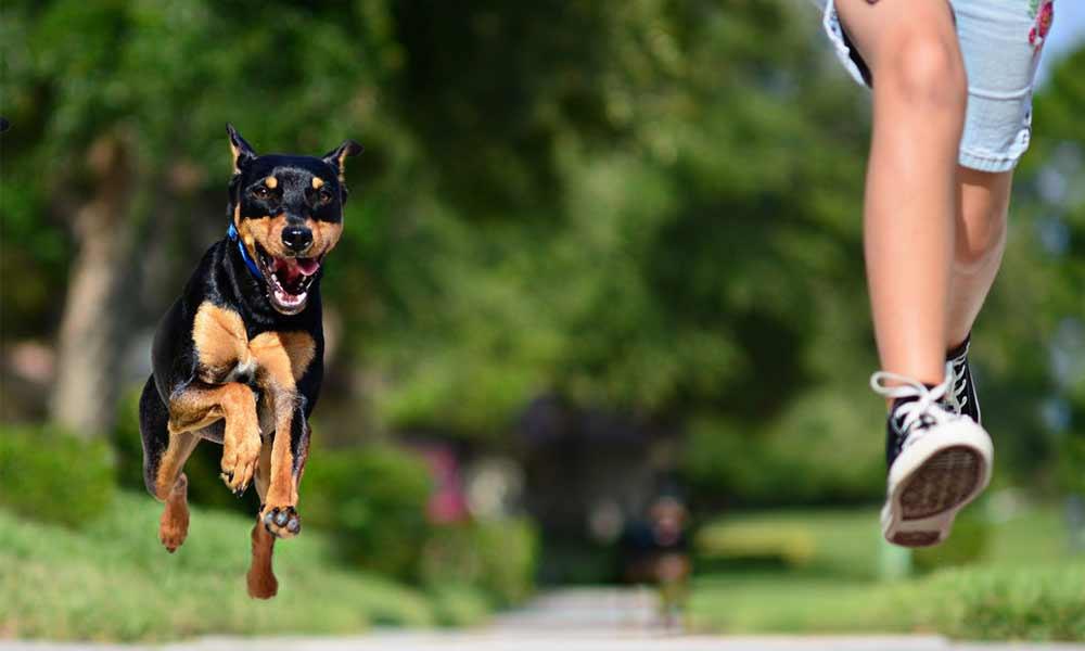 ترس از سگ | علل، نشانه ها و نحوه درمان فوبیای سگ