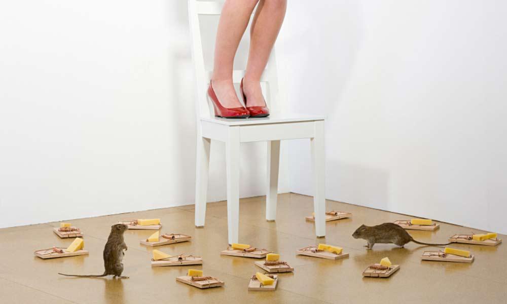 ترس از موش | علل، نشانه ها و نحوه درمان فوبیای موش