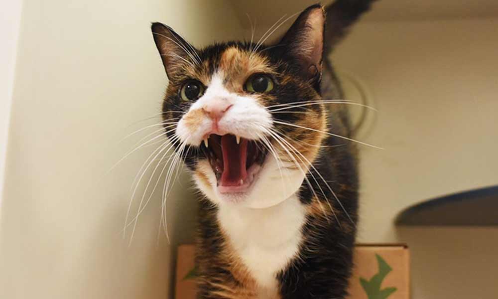 ترس از گربه | علل، علائم و درمان فوبیای گربه