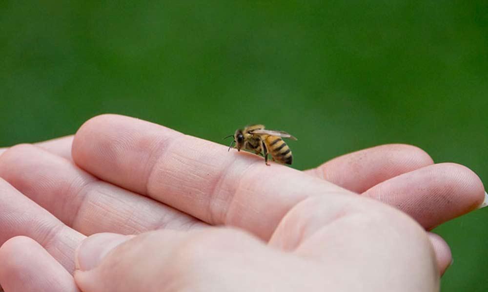 ترس از زنبور | علل، نشانه ها و نحوه درمان فوبیای زنبور
