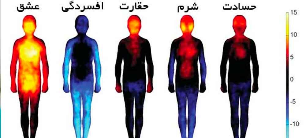 نقش احساسات در بدن