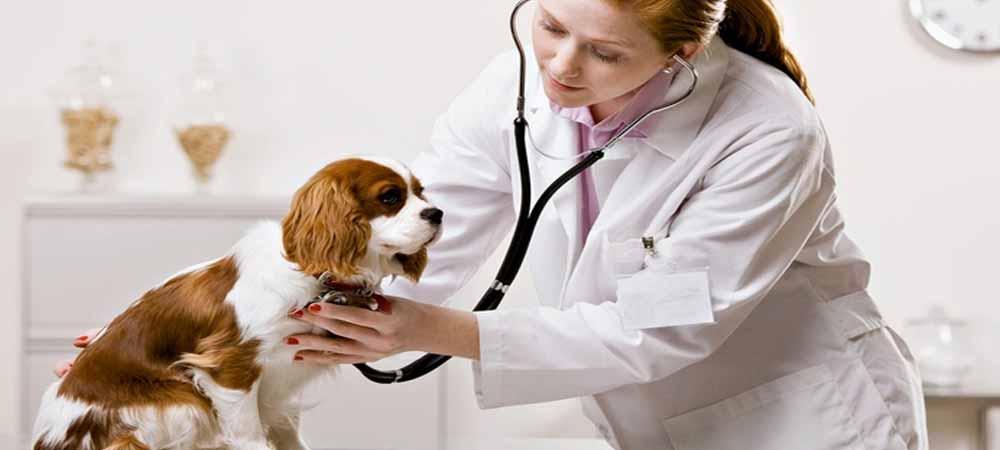 توصیه هایی برای نگه داری از حیوانات خانگی