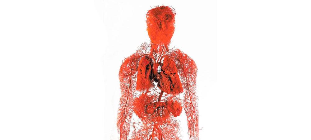 عروق خونیتان را بشناسید