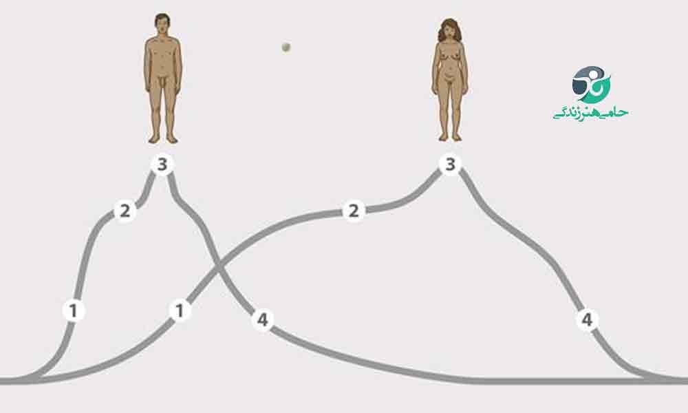 چرخه پاسخ جنسی