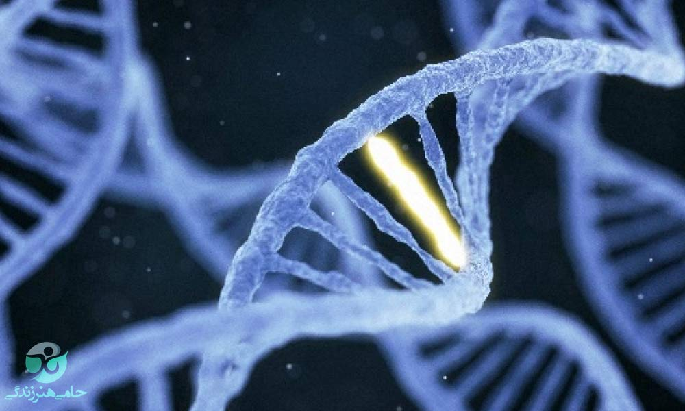 غربالگری جنین | آزمایش غربالگری اول و دوم