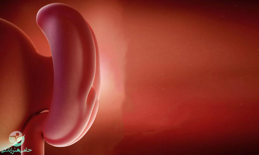 هفته چهارم بارداری | علائم و تغییرات هفته چهارم