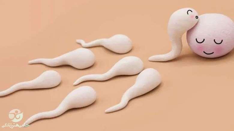 اقدام برای بارداری | به این توصیهها توجه کنید