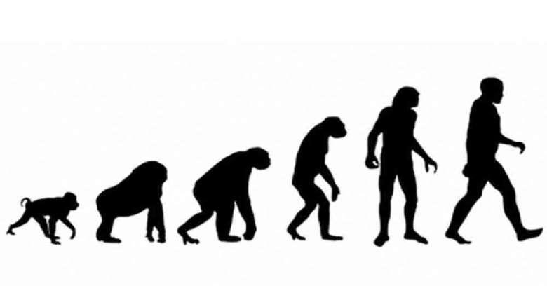 نظریه داروین | نظریه داروین به زبان ساده