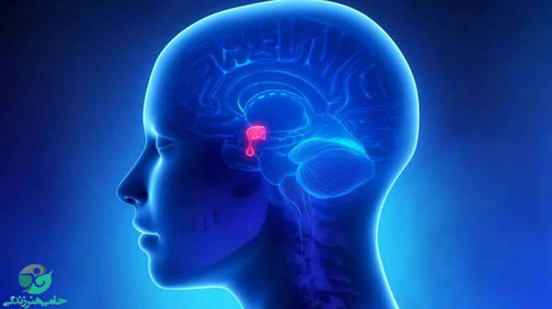 غده هیپوتالاموس | هر آنچه که باید درباره غده هیپوتالاموس بدانید