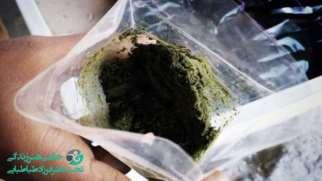 مخدر پان پراگ چیست | با مواد تشکیل دهنده و عوارض آن آشنا شوید