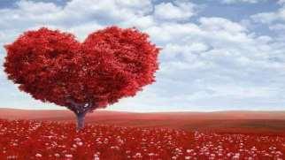 چگونه یک ارتباط عاشقانه را آغاز کنیم