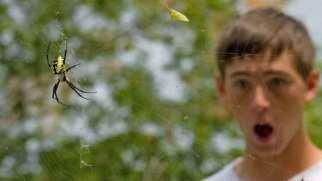 ترس از عنکبوت | علل، نشانه ها و نحوه درمان فوبیای عنکبوت
