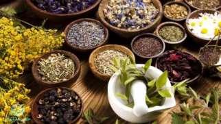 گیاهان دارویی | آشنایی با خواص بهترین گیاهان دارویی