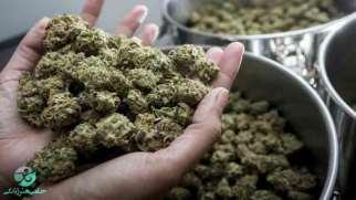 عوارض ماریجوانا | آسیبهای مصرف ماریجوانا بر جسم و روان