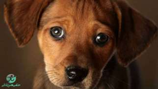 حیوان آزاری | علل، انواع و دلایل حیوان آزاری