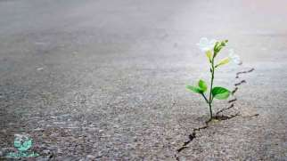 امید به زندگی | راه های تقویت امید در زندگی