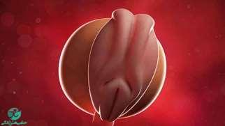 هفته اول بارداری | علائم و تغییرات جنین در هفته اول بارداری
